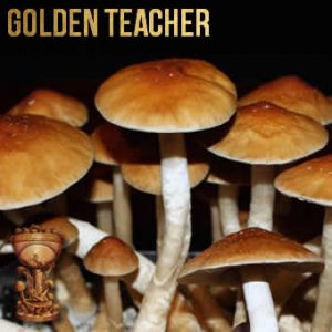 Golden Teacher