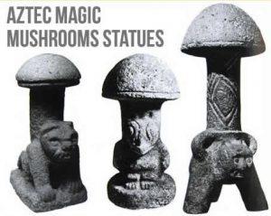Magical Magic Mushrooms
