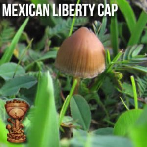 Mexican Liberty Cap