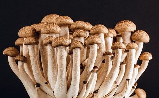 Use of Mushrooms as Anti-Inflammatory Alternative